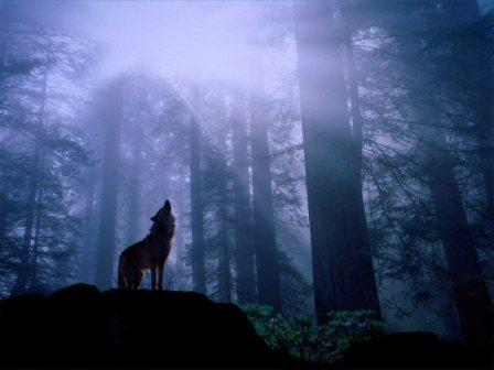 wolf_howling_in_forest_800.jpg