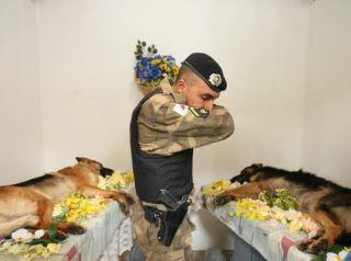 Two fallen bomb-sniffing dogs - who found the IED that killed them, but their alert saved their two-legs.